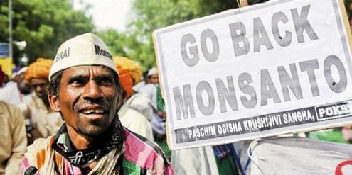 Monsanto, Indien, India, Cotton, Baumwolle, Law