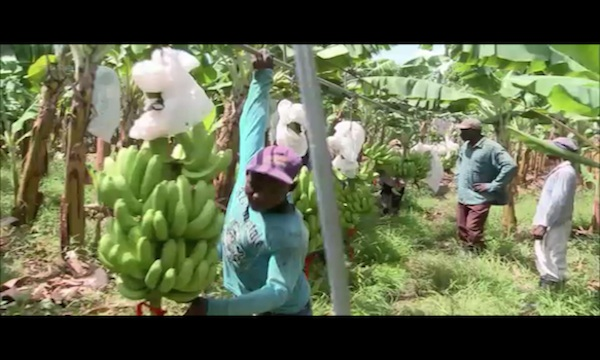 plantageKopie