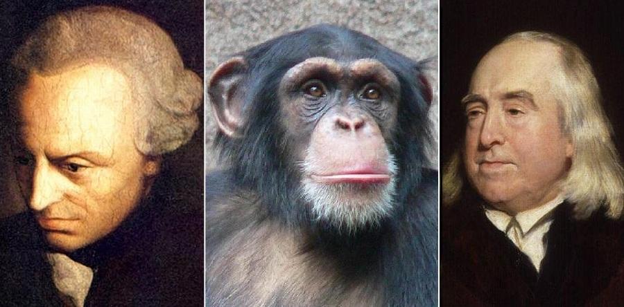 Kant_Schimpanse_Bentham