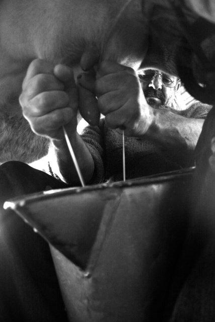 Hand_milking1