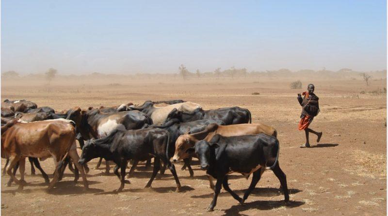 trockenheitafrika