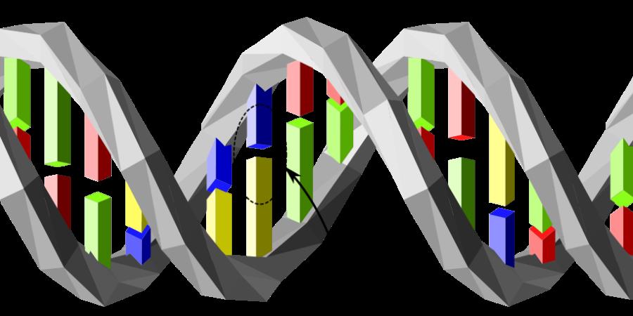 DNAAnalyse_Wikipedia