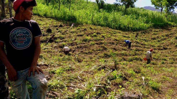 KleinbauernBetrieb_Lateinamerika