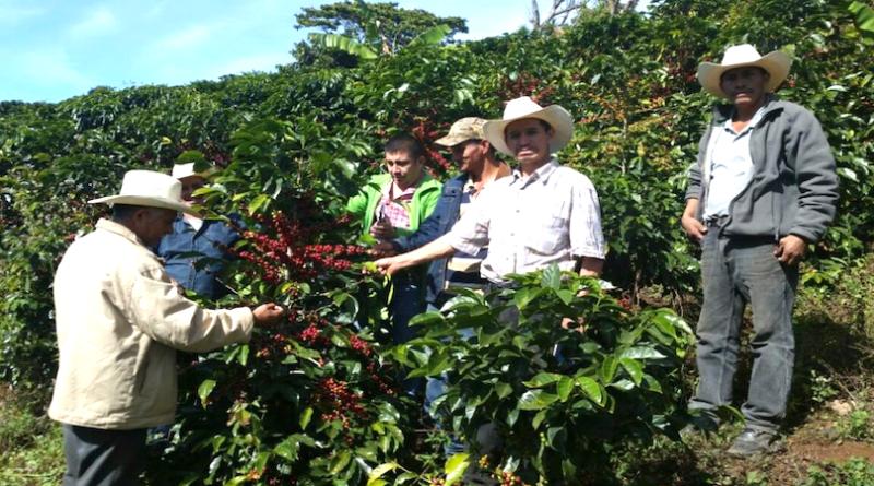 Kaffeepflanzer_Honduras_CDAISKopie