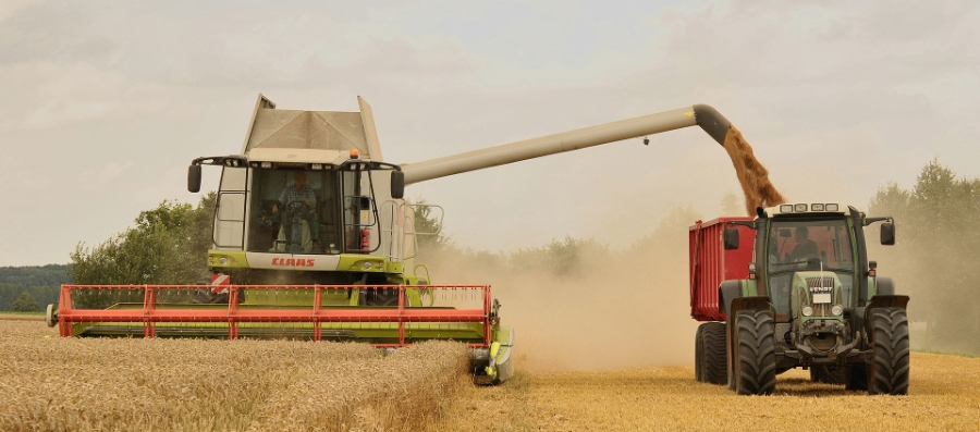 Unload_wheat_by_the_combine_Claas_Lexion_584