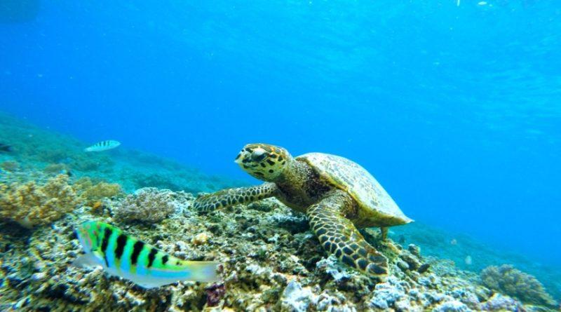 underwater663407_960_720
