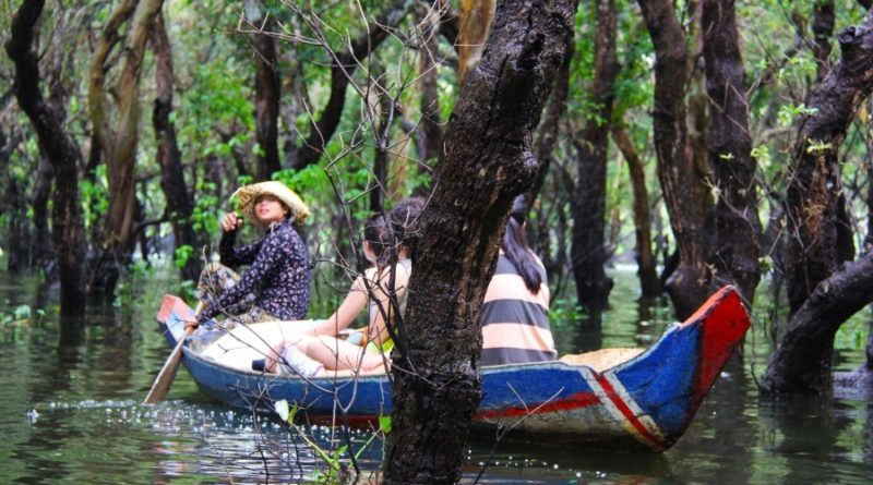 floating_forest_floating_forest_green_trees_beautiful_boat_tourists690280_jpgd