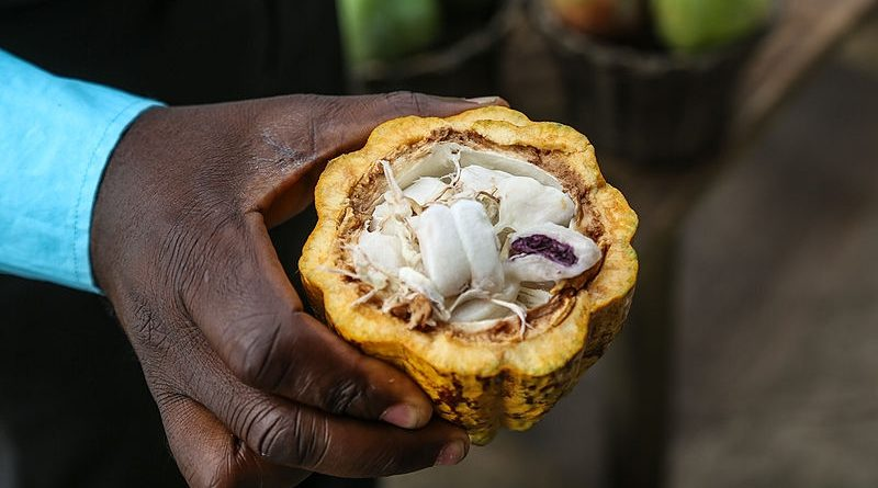 Ghana_cacao2