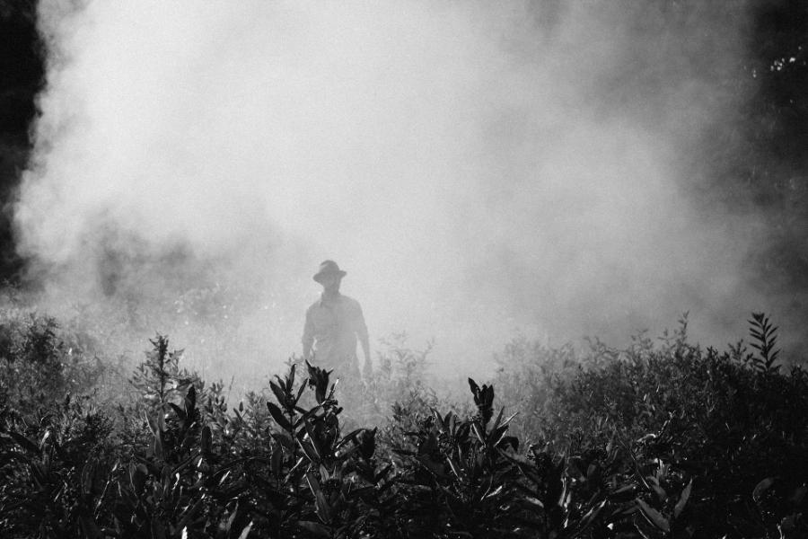 fog918976_1920