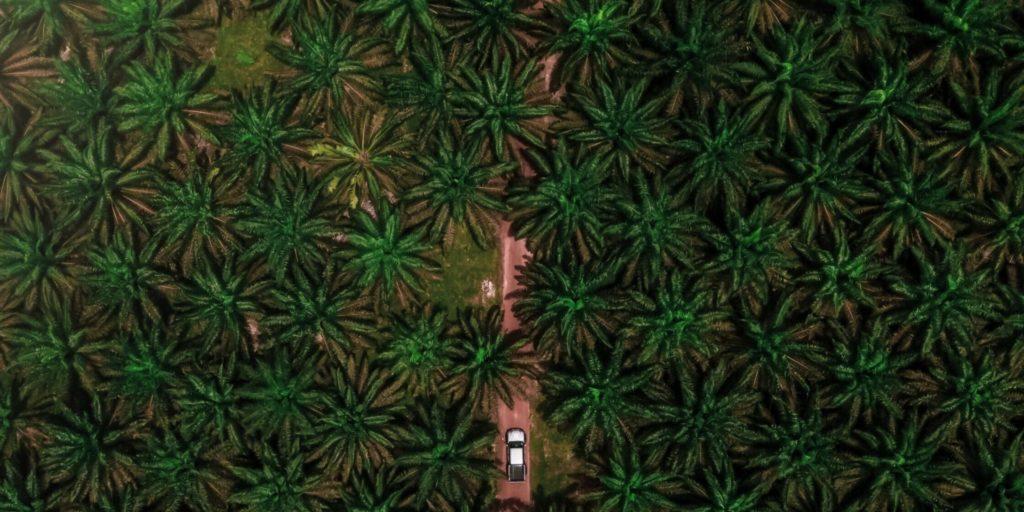 Palmölplantage Malaysia