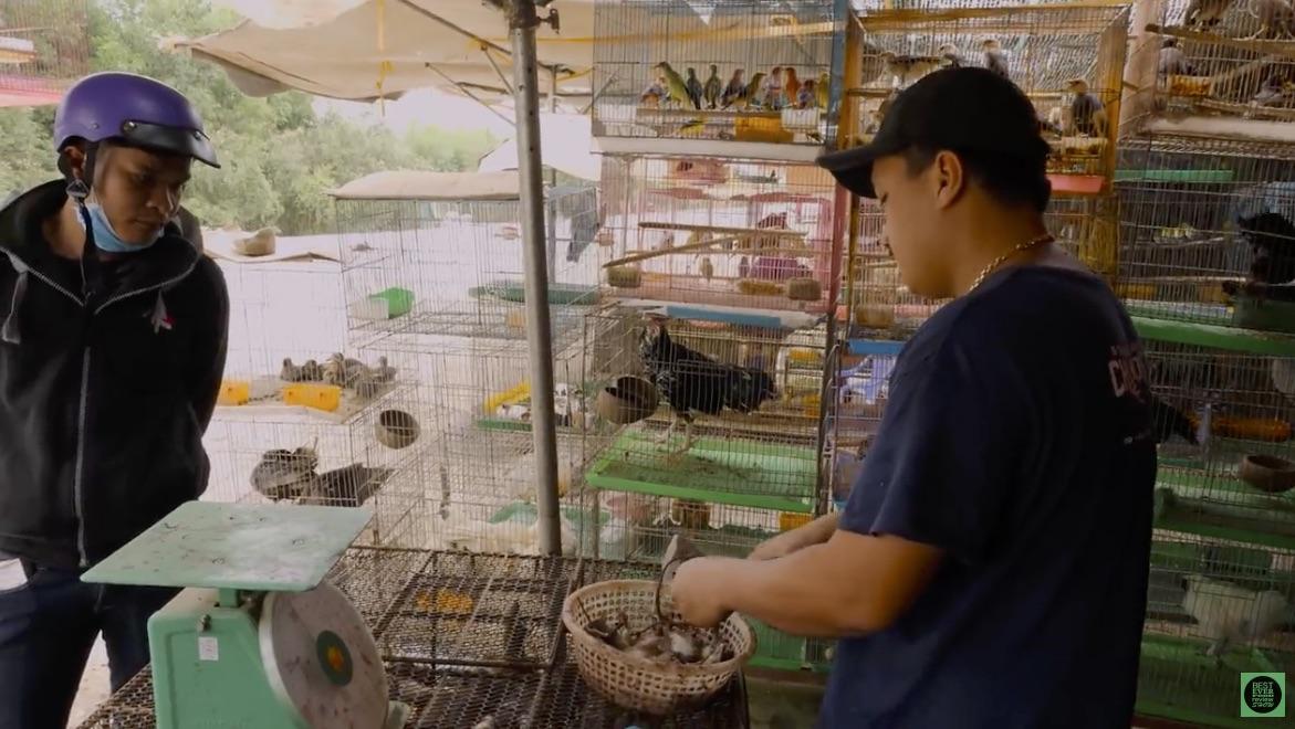 tiermarkt